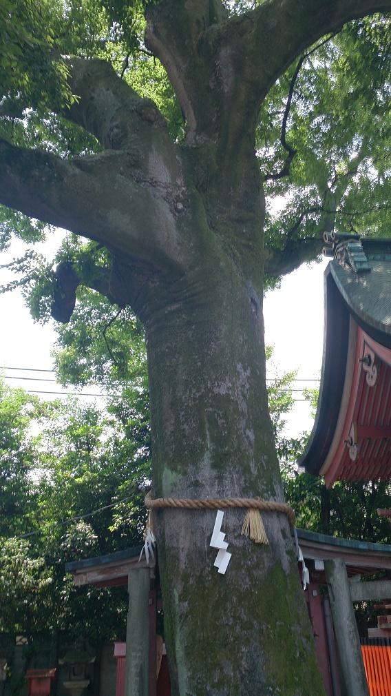 武信稲荷神社ご神木